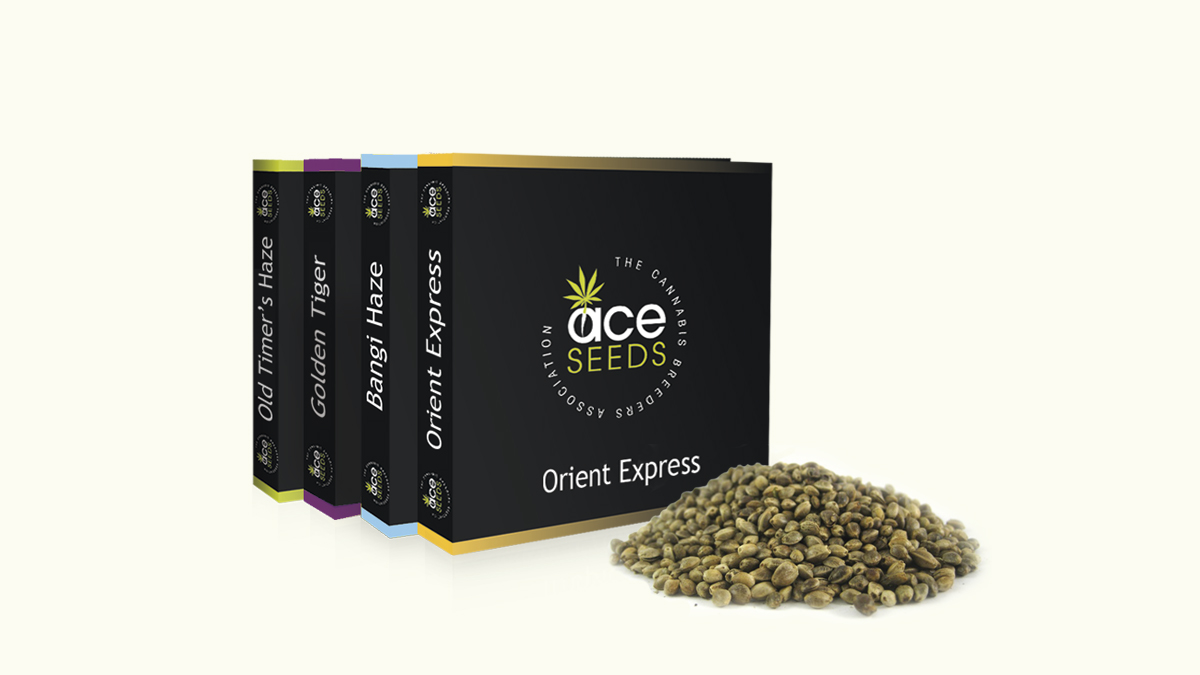 Ace Seeds image