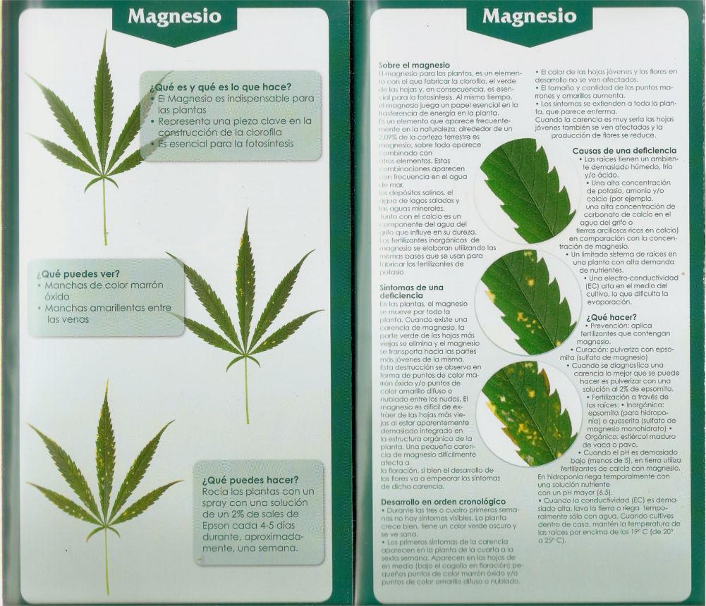 Carencias Magnesio