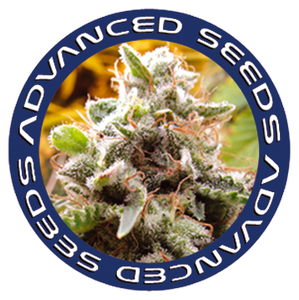 Advanced Seeds Semillas de marihuana