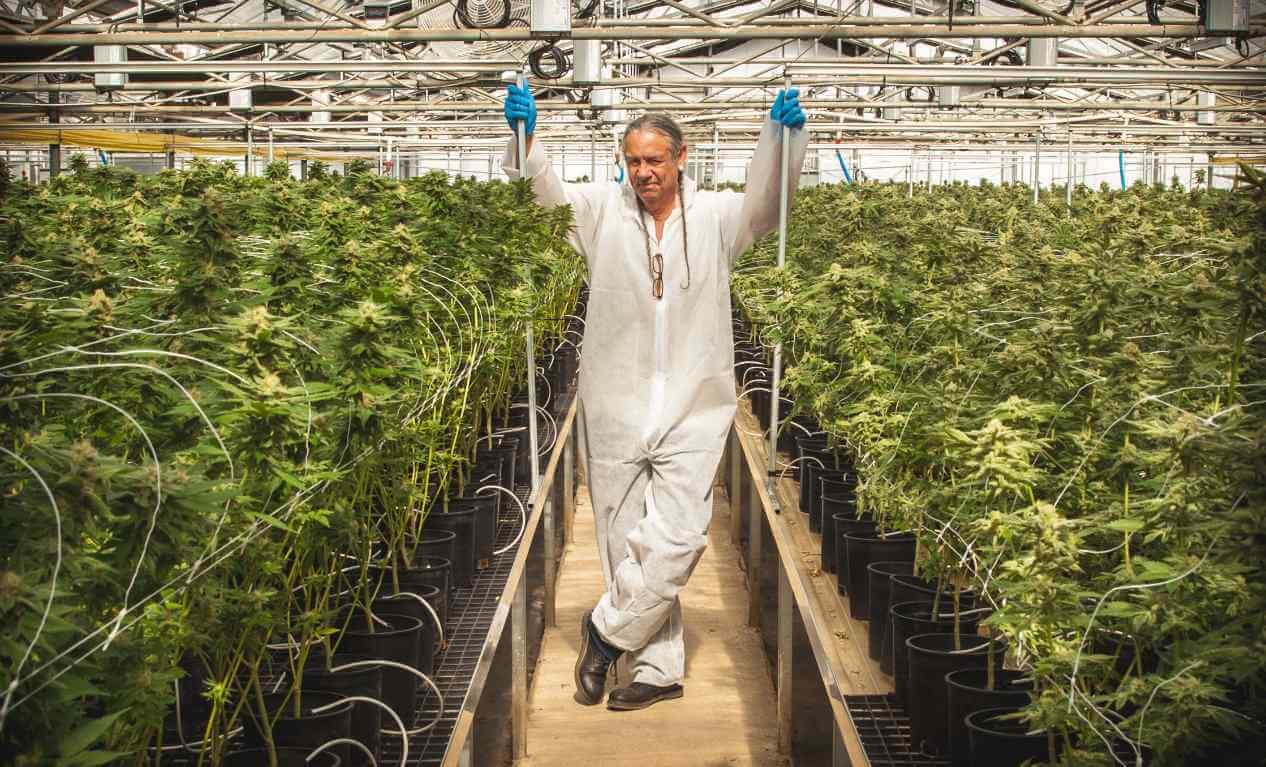 Steve DeAngelo cultivando marihuana