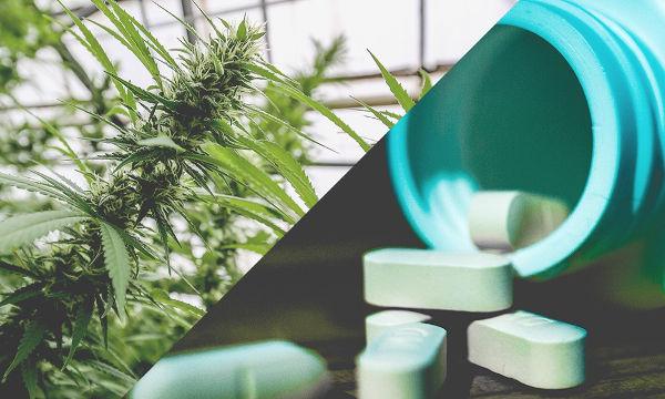 CBC en marihuana