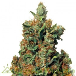 Red Diesel (Barney´s Farm)