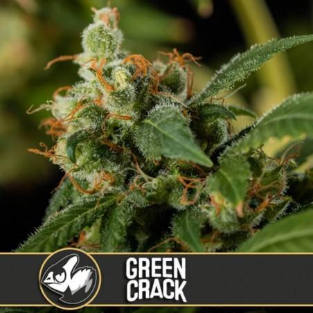 Green Crack (Blimburn Seeds)