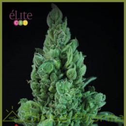 Solodiol Auto CBD (Elite Seeds)
