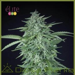 Llimonet Haze Auto CBD (Elite Seeds)