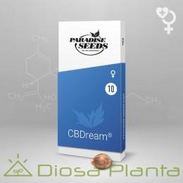 CBDream (Paradise Seeds)