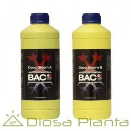 Coco Bloom A y B