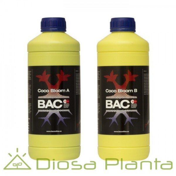 Bac Coco Bloom A y B