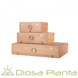 Cajas de curado 00 Box (3 tamaños)