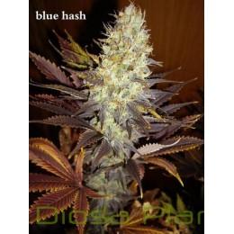 Blue Hash (Dinafem)