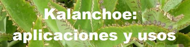 Proyecto Kalanchoe