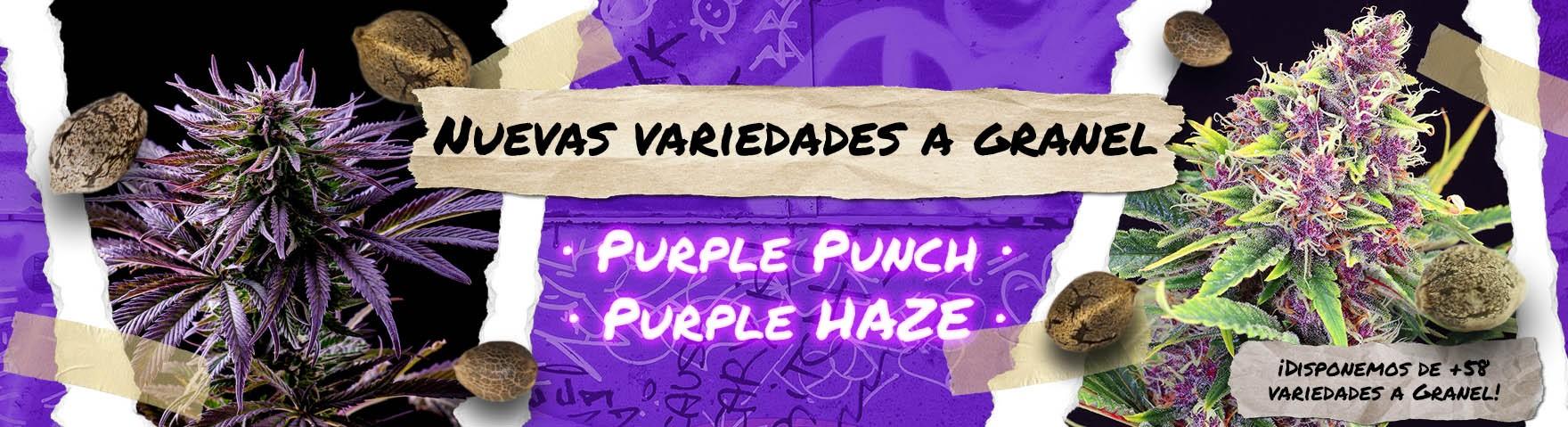 Nuevas Granel Purple