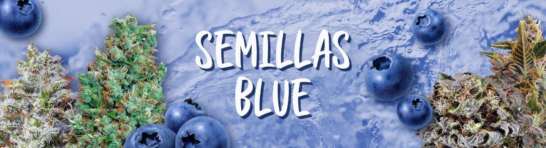 Semillas Blue
